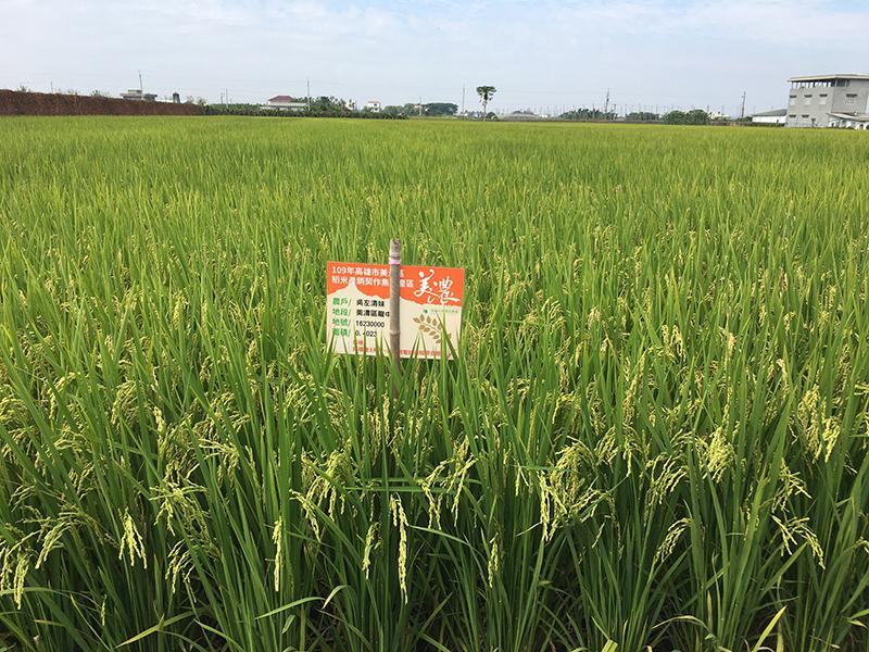 圖4、109年美濃地區的精品白米專區開始導入雜草型紅米的防治管理措施。