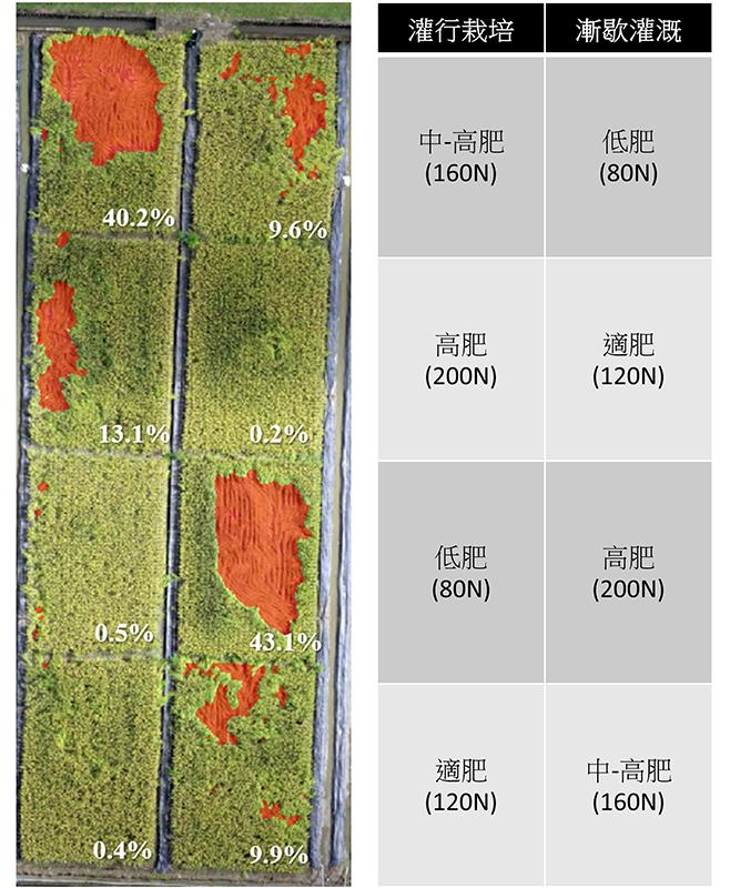 圖1、空拍影像快速調查並分析倒伏災損面積與比例。