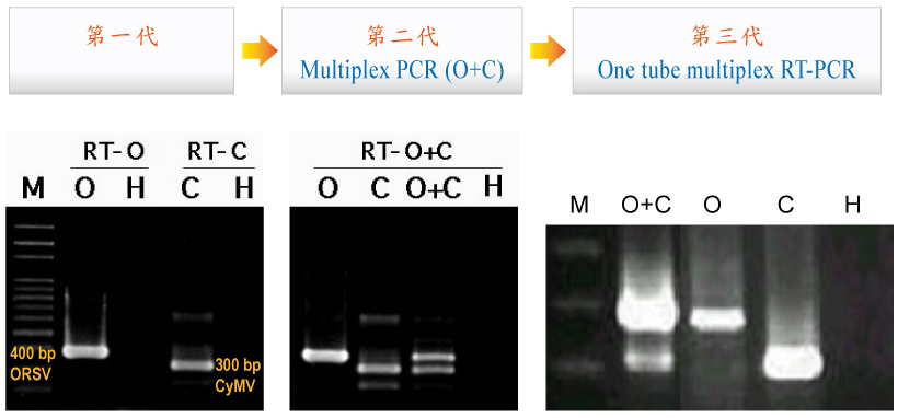 PCR and RT-PCR are very sensitive and accurate indexing methods